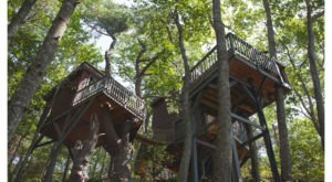 Spend Your Days Amidst The Pines In This One-Of-A-Kind Maine Tree Dwelling Village