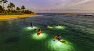 Take These Glass-Bottom Kayaks Out In Hawaii For An Adventure Unlike Any Other