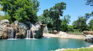 This Zoo In Rhode Island Has Animals That You May Have Never Seen In Person Before