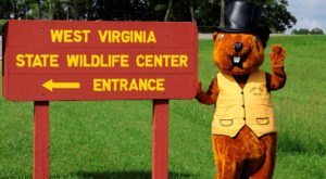This Can't-Miss West Virginia Groundhog Day Festival Will Make Your Season Complete