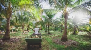 Hawaii's Only Coconut Farm Is A Natural Oasis Just Begging To Be Visited