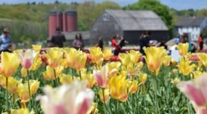 The 10 Places You Absolutely Must Visit In Rhode Island This Spring