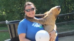 You Can Have An Up Close Encounter With Sloths At This Mississippi Zoo