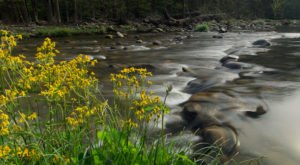 The 8 Best And Most Beautiful Places To See Wildflowers In Tennessee This Spring