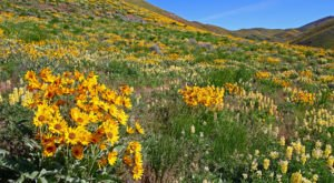 The 7 Best And Most Beautiful Places To See Wildflowers In Idaho This Spring