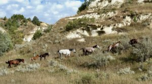 The Magical Place In North Dakota Where You Can View A Wild Horse Herd