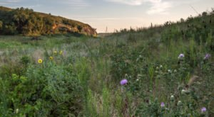 The 9 Best And Most Beautiful Places To See Wildflowers In Kansas This Spring