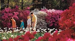 The Most Beautiful Azalea Festival In Oklahoma You Won't Want To Miss
