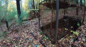 Everyone In Connecticut Should See What's Inside The Gates Of This Abandoned Zoo