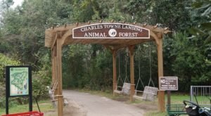 Most People Don't Know This South Carolina Zoo And Adventure Park Even Exists