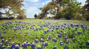 These 10 Stunning Bluebonnet Fields Around Austin Are Perfect For Your Next Family Photo