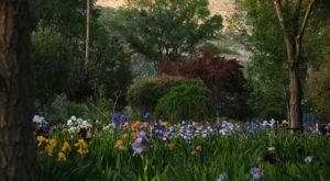 Visit This Iris Farm In New Mexico For That Beautiful Scenic Experience You Crave