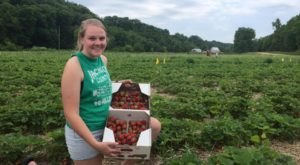 Take The Whole Family On A Day Trip To This Pick-Your-Own Strawberry Farm In Iowa