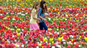 The Dreamy Tulip Farm In Virginia You'll Want To Visit This Spring