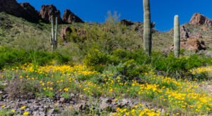 This Easy Wildflower Hike In Arizona Will Transport You Into A Sea Of Color