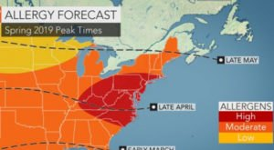 You Might Not Like These Predictions About North Carolina's Upcoming Peak Allergy Season