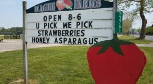 Take The Whole Family On A Day Trip To This Pick-Your-Own Strawberry Farm In Delaware