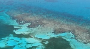 This Florida Barrier Reef Is The Coolest Thing You'll Ever See For Free
