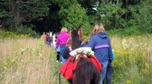 Go Hiking With Llamas Near Buffalo For An Adventure Unlike Any Other
