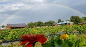 Take The Whole Family On A Day Trip To Blooms & Berries Farm Market, A Pick-Your-Own Farm Near Cincinnati