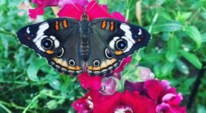 The Butterfly Forest In Idaho That's The Perfect Family Destination