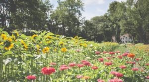A Visit To This Blooming Flower Farm In Massachusetts Will Enchant You Beyond Words
