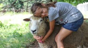 Play With Lambs At This One-Of-A-Kind Springtime Farm Festival In Massachusetts