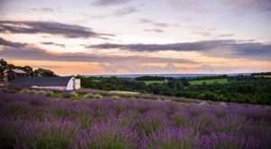 The Dreamy Lavender Farm In Pennsylvania You'll Want To Visit This Spring