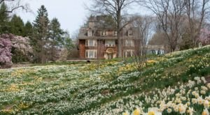 The Dreamy Daffodil Fields In New Jersey You'll Want To Visit This Spring