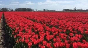 Visit This Flower Farm Near Nashville For That Beautiful Scenic Experience You Crave