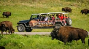 There Is No Better Place To See South Dakota Wildlife Than This Epic Tour