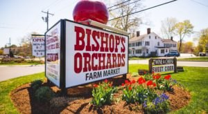 This Connecticut Orchard Is Triple The Fun With A Bakery, Farm Market, And Winery All In One