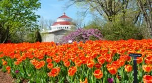 7 Flower-Themed Destinations In Cincinnati That Will Make Your Spring Bloom