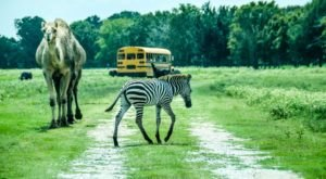 Take A Walk On The Wild Side At This Unique Safari Park In Louisiana