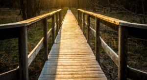 This Hidden Boardwalk Hike Through Virginia Will Take You On An Unforgettable Adventure