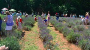 The Annual Lavender Festival At This Georgia Farm Belongs On Your Calendar