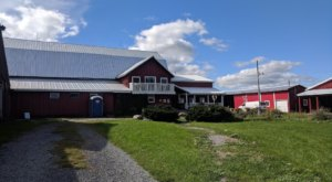 You'll Have Loads Of Fun At This Dairy Farm Near Buffalo With Incredible Cheese