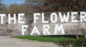 The Dreamy Flower Farm In Kansas You'll Want To Visit This Spring