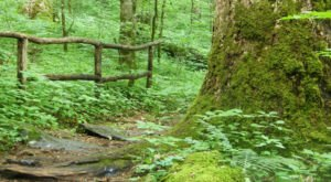 Hike This Ancient Forest In North Carolina That's Home To 400-Year-Old Trees