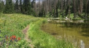 The Alpine Pond Trail In Utah That's Easy Enough For Almost Anyone