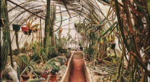 The Botanical Garden In The Southern California Desert That's A Dream Come True