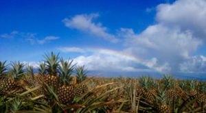 You Can't Pass Up A Tour Of This One-Of-A-Kind Pineapple Farm In Hawaii
