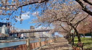 The Riverfront Park In New York That's Filled With Cherry Blossoms And Begging For A Visit