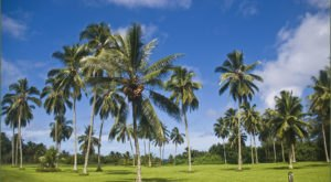 This Beautiful 294-Acre Botanical Garden In Hawaii Is A Sight To Be Seen