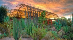 This Beautiful 140-Acre Botanical Garden In Arizona Is A Sight To Be Seen