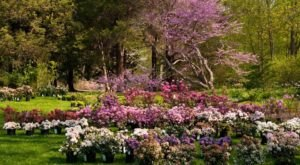 This Beautiful 91-Acre Botanical Garden In Connecticut Is A Sight To Be Seen