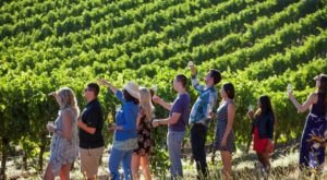 The One-Of-A-Kind Wine Hike In Northern California That Makes For An Unforgettable Day Trip