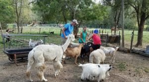 Spend A Day Relaxing With Animals At This Rescue Ranch In Nebraska