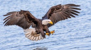 The Massive Bird Migration In Alaska That The Whole Family Will Enjoy