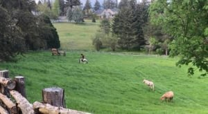 You Can Bond With Wild Mustangs At This One-Of-A-Kind Oregon Ranch